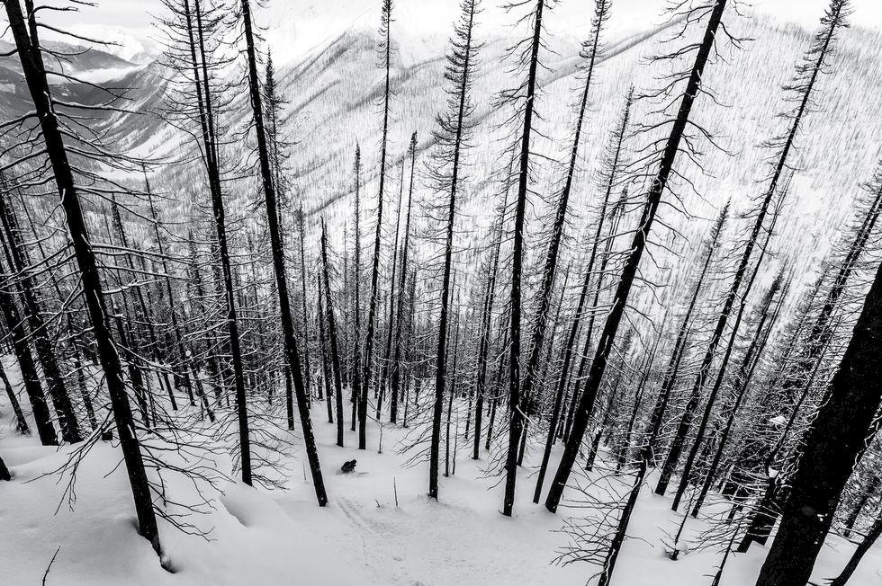 Bildspecial: 8 bilder som eldar på skidsuget