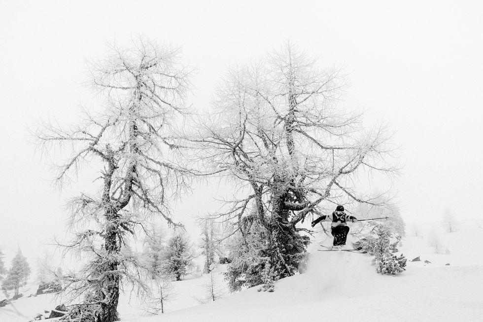 Världens bästa skogsåkning i februarinumret