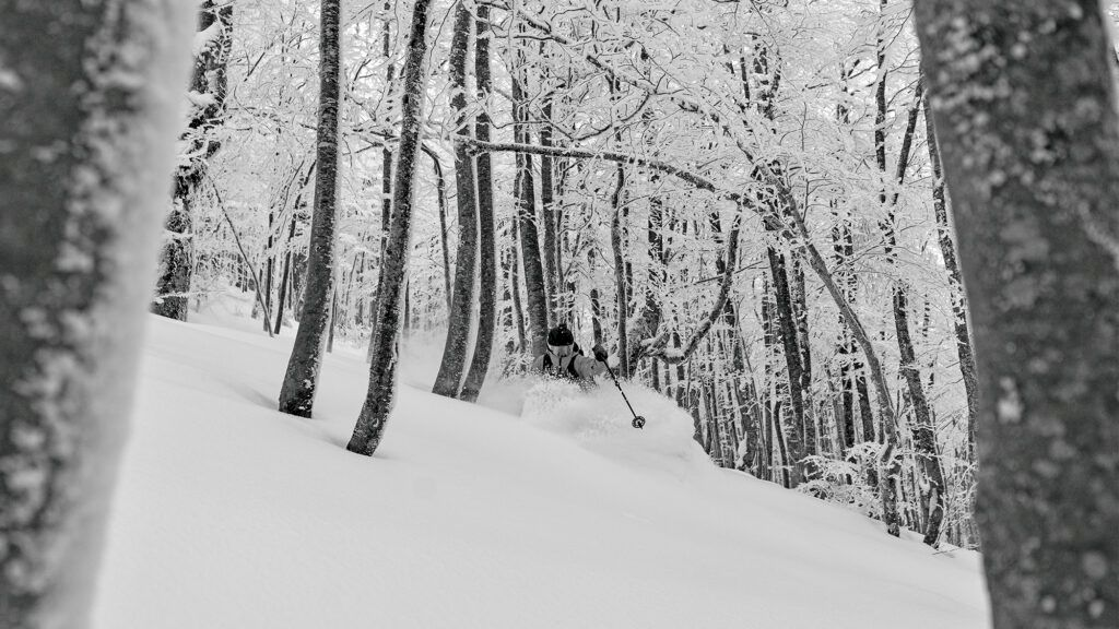 Puderfylld skidåkning i Sarajevo. Foto: Johan Ståhlberg